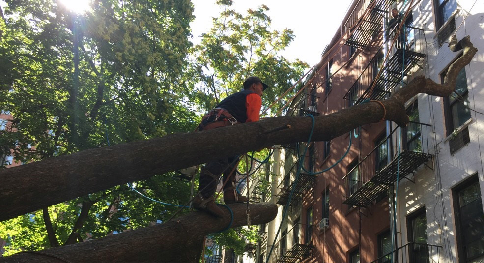 New York tree care, tree removal New York, New York tree company