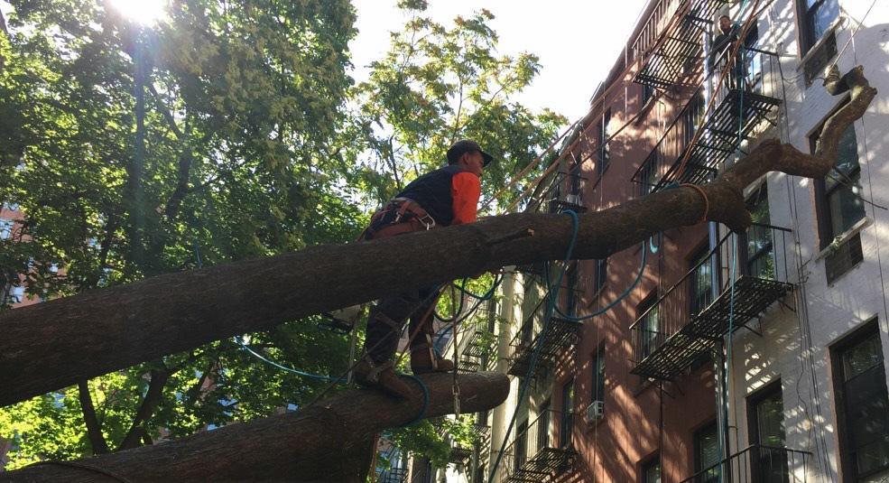 New York tree care, tree removal New York, New York tree company